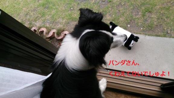 S-きゃっちとパンダさん20130703-1