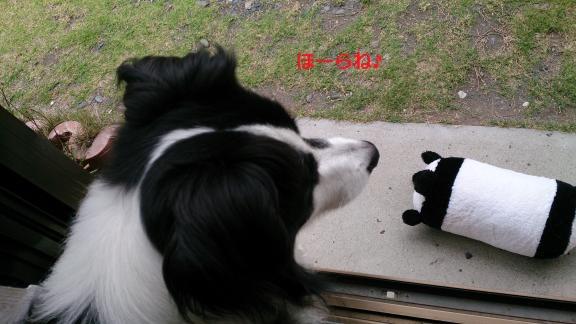 S-きゃっちとパンダさん20130703-2