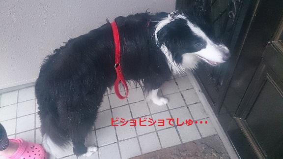 s-DSC_0539.jpg