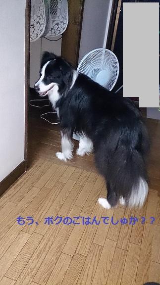 s-DSC_0620.jpg