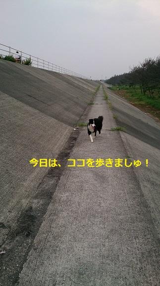 s-DSC_0770.jpg
