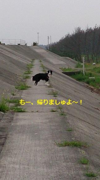 s-DSC_0773.jpg