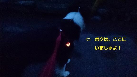 s-DSC_0860.jpg