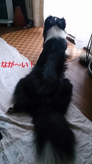 s-DSC_0996.jpg