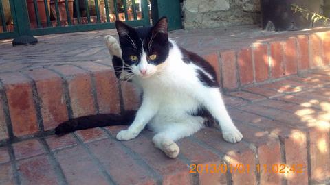 ネアポリ考古学公園入口付近の猫さま1inシラクーサ