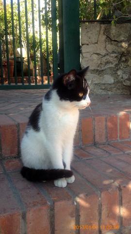 ネアポリ考古学公園入口付近の猫さま2inシラクーサ