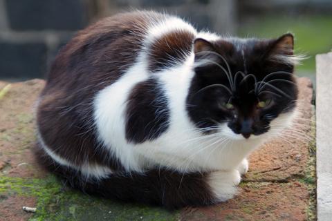 円形闘技場の猫さま1inカターニア