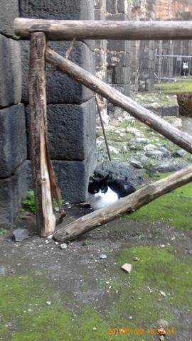円形闘技場の猫さま3inカターニア
