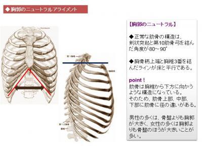 胸郭のニュートラルアライメント