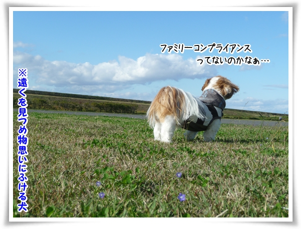 P1070479_1.jpg
