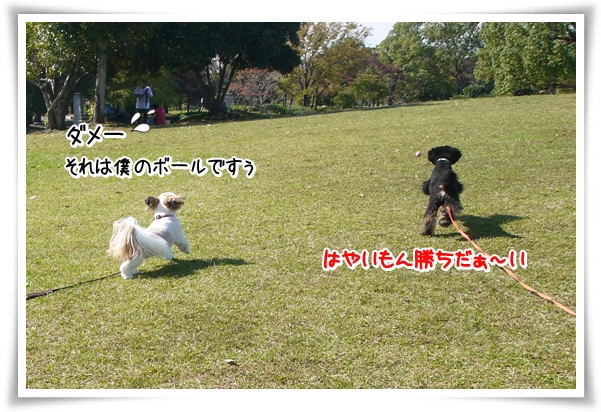 P1070505_1.jpg