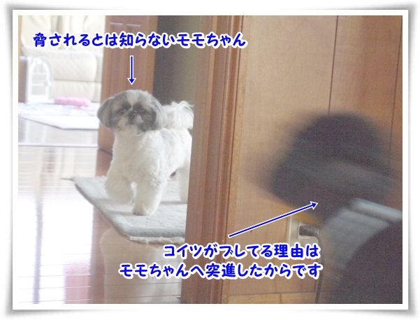 P1070574_1.jpg