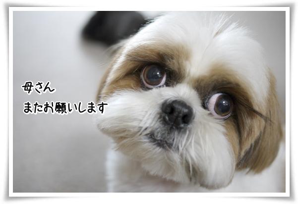P1070688_1.jpg