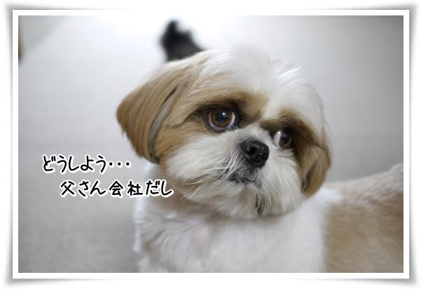 P1070689_1.jpg
