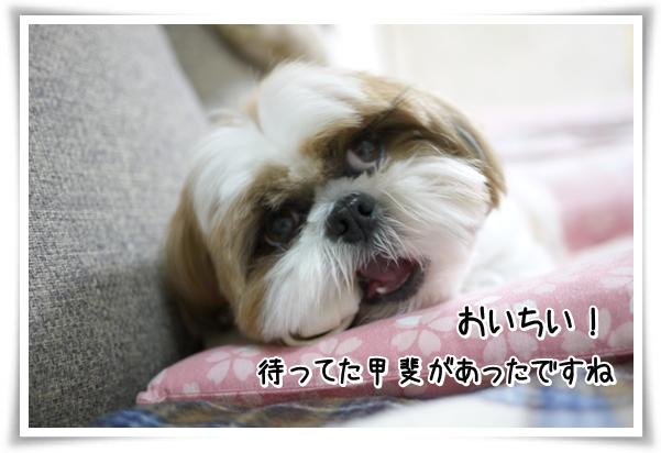 P1070729_1.jpg