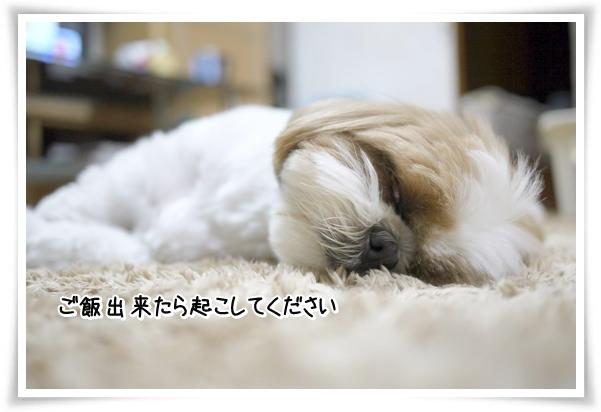 P1070753_1.jpg