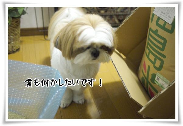 P1070757_1.jpg