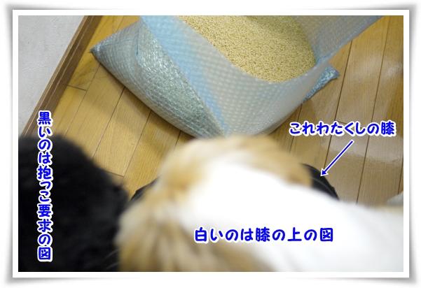 P1070760_1.jpg