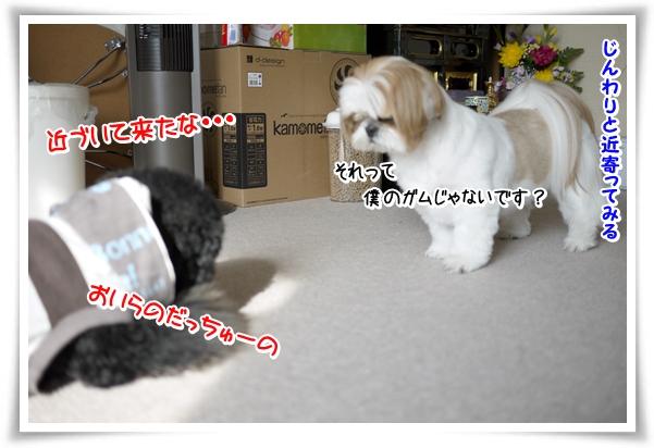 P1070795_1.jpg