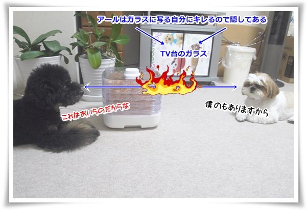 P1070812_1.jpg