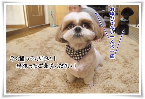 P1070846_1.jpg