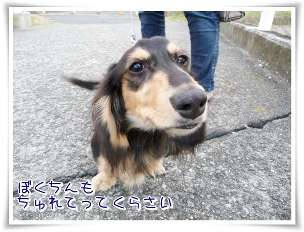 P1080012_1.jpg