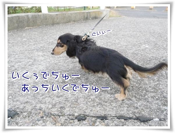 P1080013_1.jpg