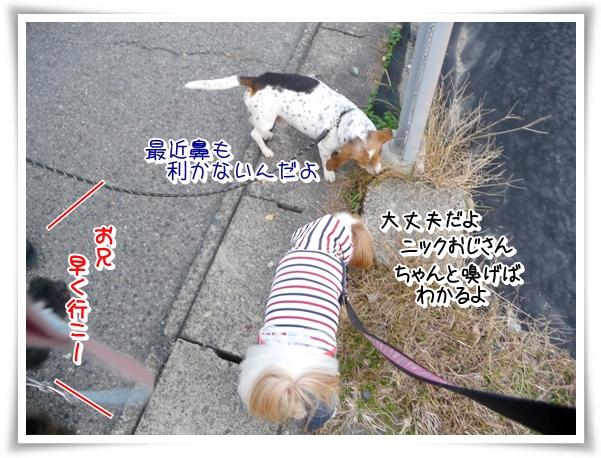P1080034_1.jpg