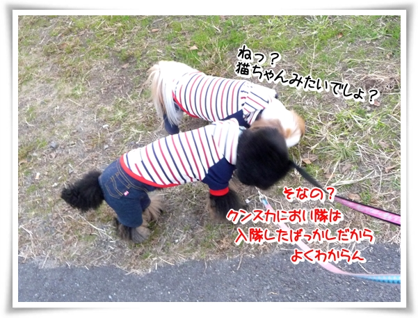 P1080048_1.jpg