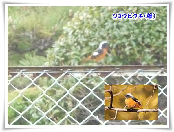 P1080051_1.jpg