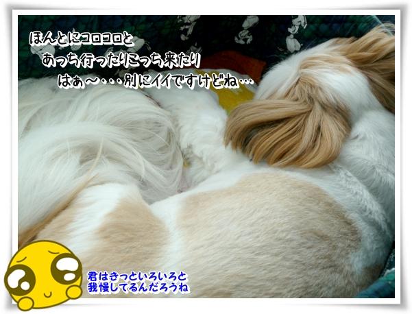 P1080300_1.jpg