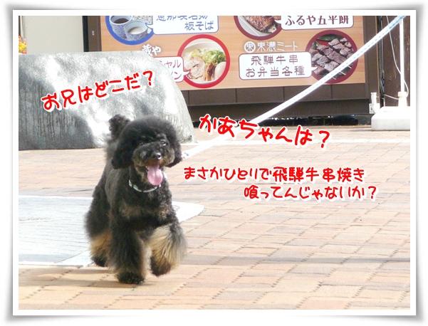 P1080317_1.jpg