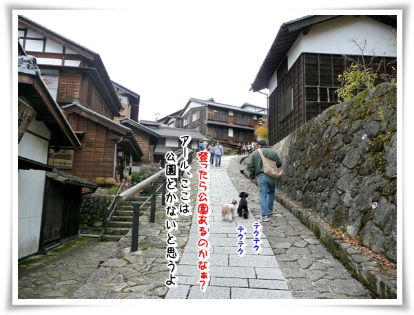 P1080461_1.jpg