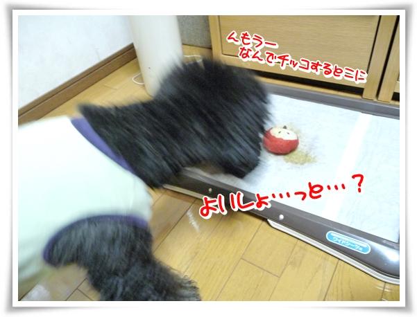 P1080647_1.jpg