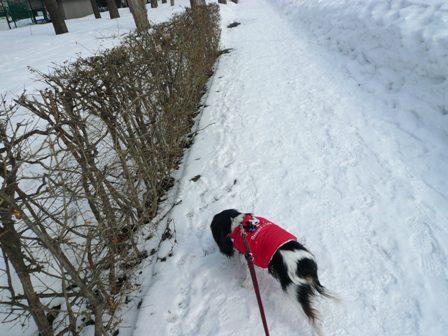 雪かさも無くなった