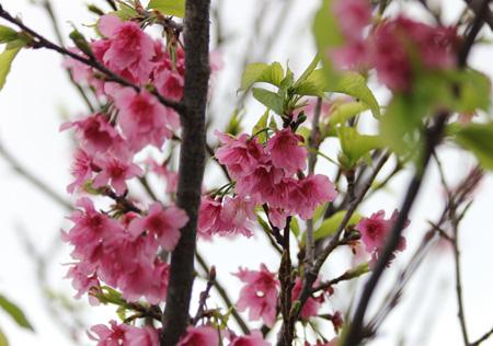 春季キャンプ2011②-255
