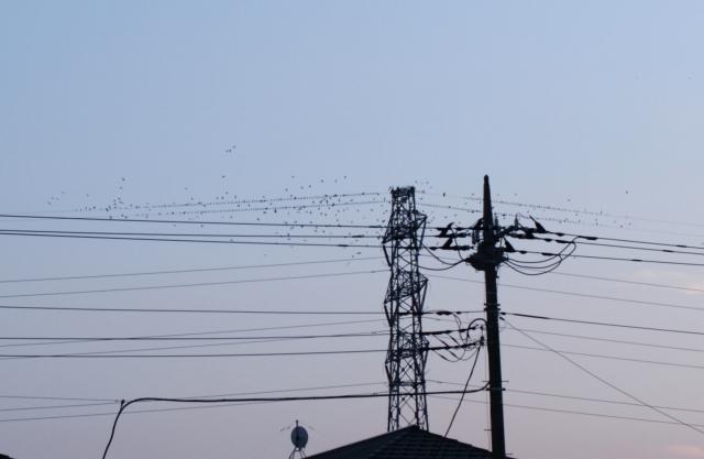 20111115 (11)