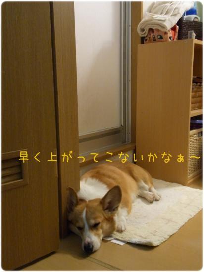 RIMG0610.jpg