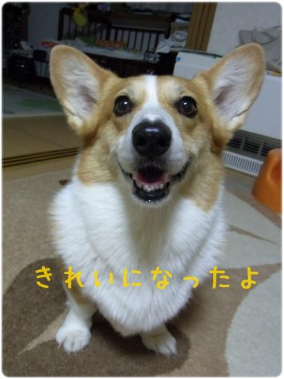 RIMG0819.jpg