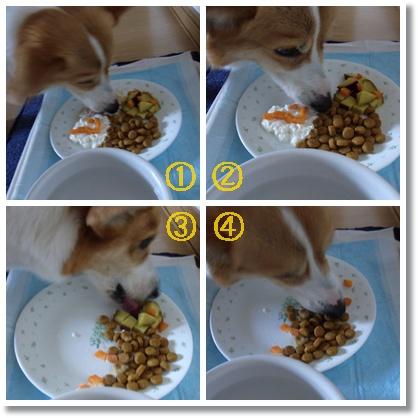 cats_20110706200716.jpg