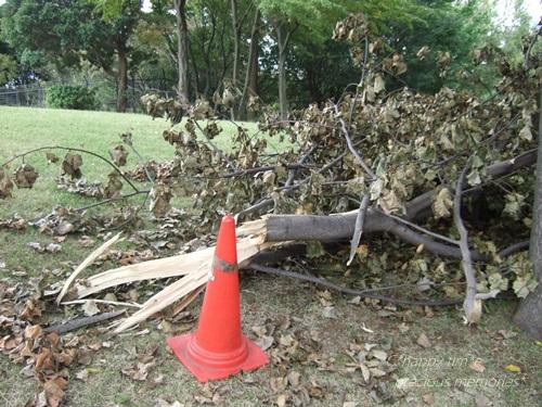 台風の残骸