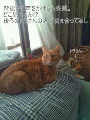 見ない猫6