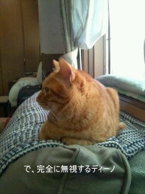 見ない猫5