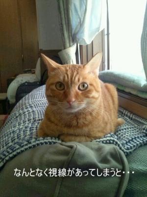 見ない猫3