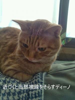 見ない猫2