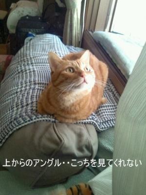 見ない猫1