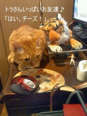 見ない猫9