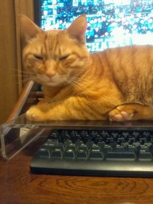 キーボードを猫から守る4