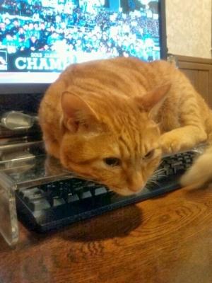 キーボードを猫から守る3