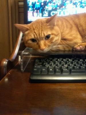 キーボードを猫から守る2